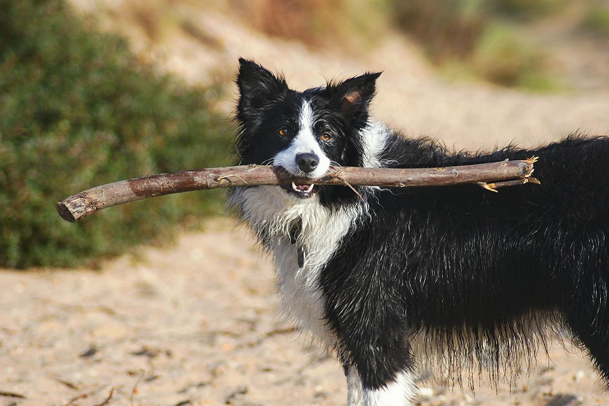 Vakantie hond Texel